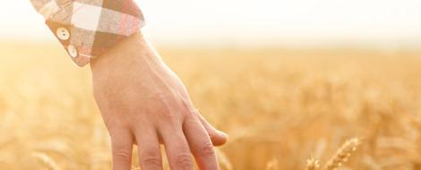 Der glykämische Index informiert bei kohlenhydratreichen Lebensmitteln über die Beeinflussung des Blutzuckers.